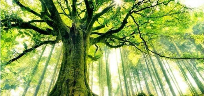 alberi (2)