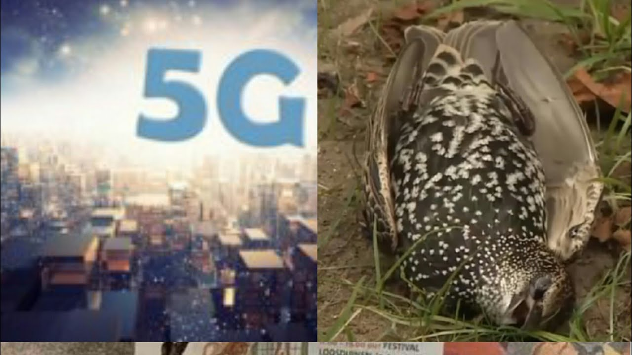 """Uccelli morti e 5G, gli animalisti: """"Sfiducia nelle istituzioni,  organizziamoci!"""" E nella Sicilia di Grillo, sabato ambientalisti in piazza:  """"Stop 5G"""" – Oasi Sana"""